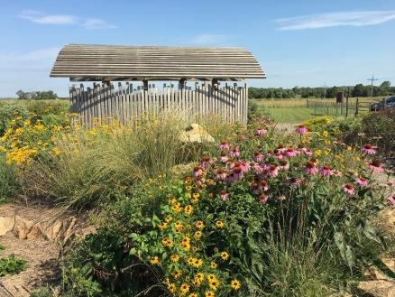 Medicinal full garden